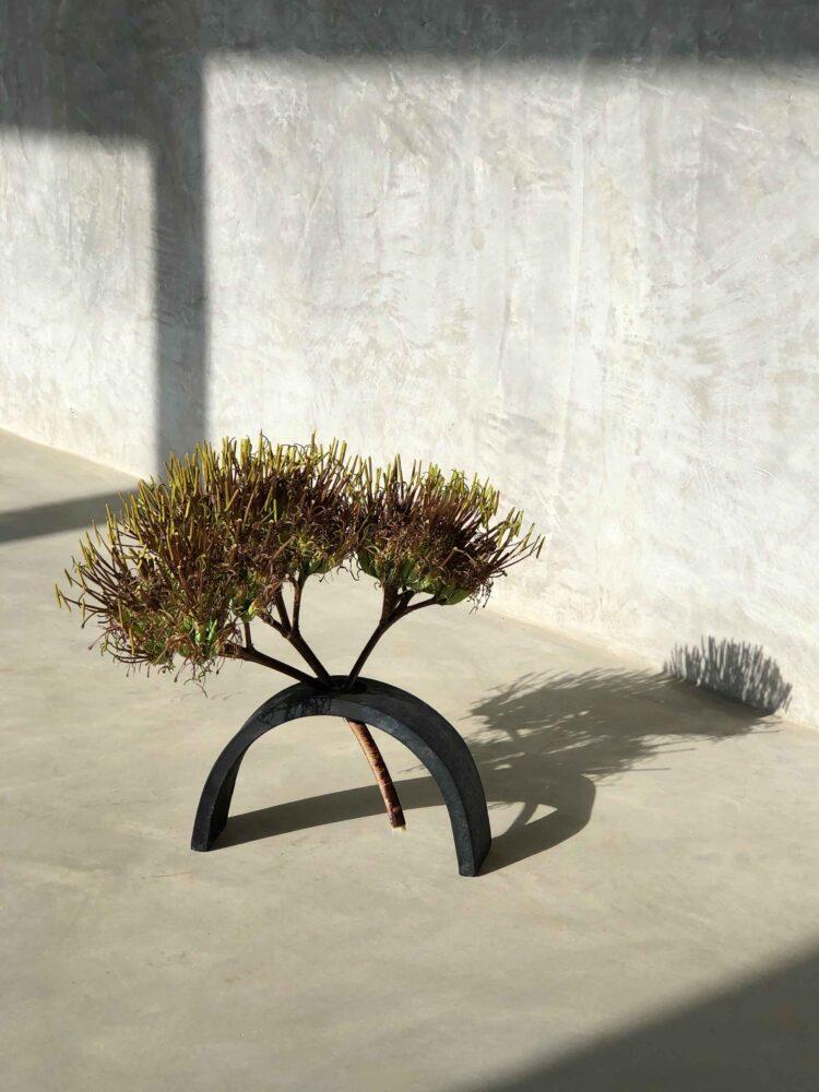 agave spirit